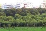 മഹാരാഷ്ട്രയിലെ കണ്ടൽക്കാടുകൾ റിസർവ് വനമായി പ്രഖ്യാപിച്ചു